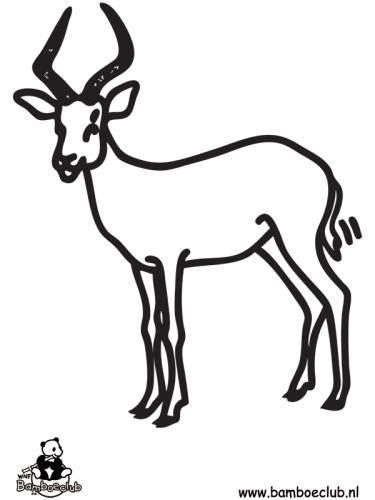 impala wnf bamboeclub dieren kleurplaten print een