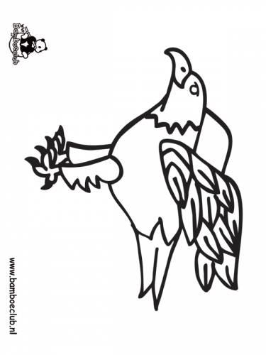 roofvogel havik wnf bamboeclub dieren kleurplaten