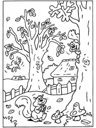 Orka Kleurplaat Herfst Eekhoorn Eekhoorn Dieren Kleurplaten