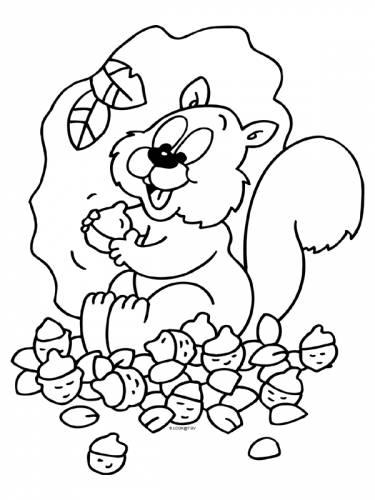 Afbeeldingen Eekhoorn Kleurplaat Herfst Eekhoorn Eikels Eekhoorn Dieren Kleurplaten